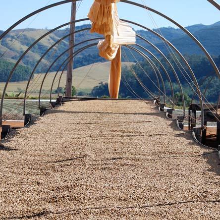 Kaffeebohnen in der Sonne beim Trocknen, nachdem die Bohnen vom Fruchtfleisch getrennt wurden - mit Hochland Bergen im Hintergrund und einer zusammengefalteten Leinenplane mit Gestell über den ausgebreiten Kaffee Bohnen - das Leinentuch kann bei zu starker Sonneneinstrahlung wie ein halbrundes Gewächshaus übergespannt werden